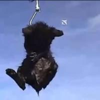 犬猫をサメのエサにする釣り人